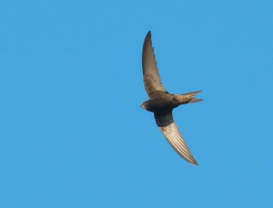 common-swift