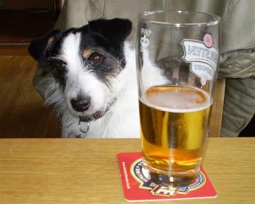 dog-beer