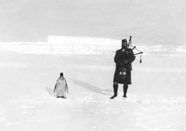 Bagpipes Penguin anr