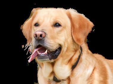 dog-3108991_960_720