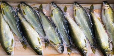 fish-1457197_960_720