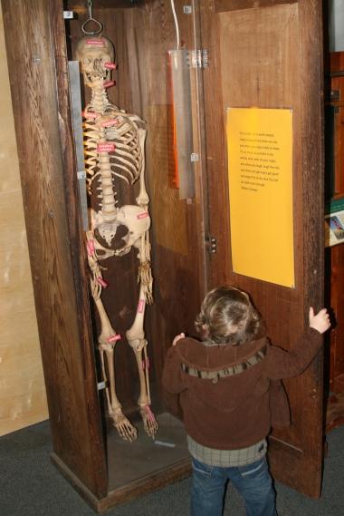 Skeleton in cupboard 4179849469_a018931f0e_b